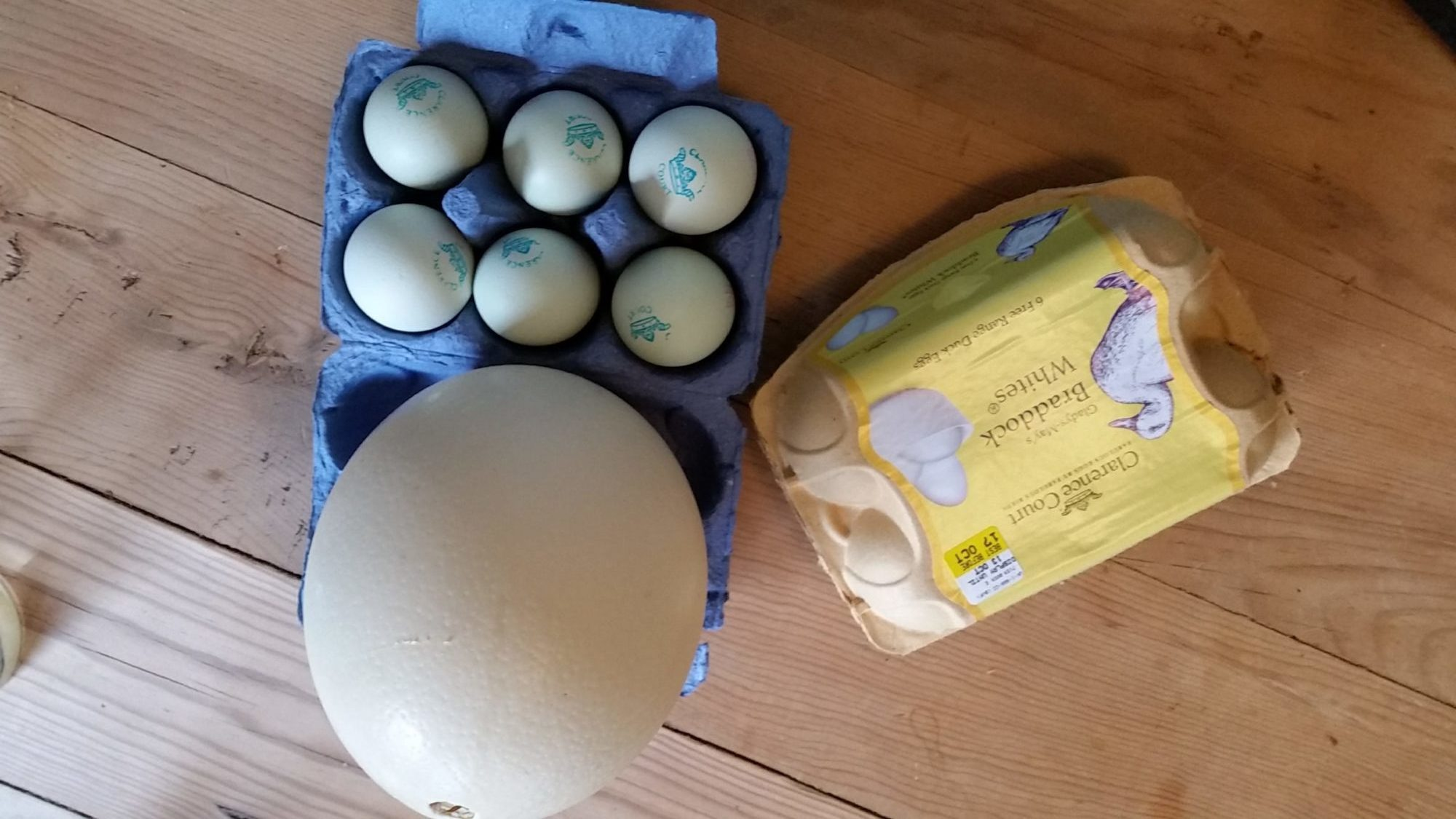 heritage chicken eggs after morning walk