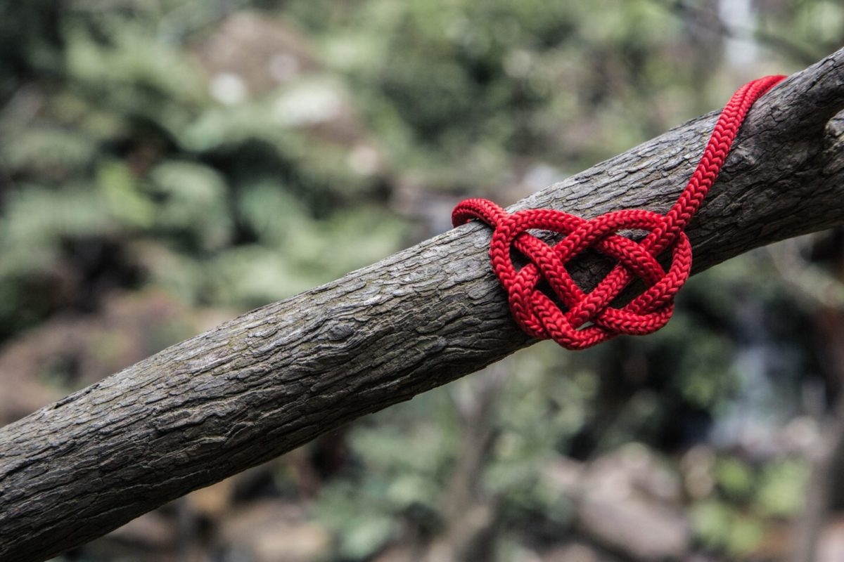 heart disease risk rope in tree